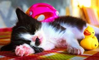 超短時間〜長時間型睡眠薬の選択法と服用中にケアすべきポイント(ハルシオン・マイスリー・デパスなど)