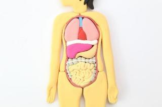 妊娠中のB型肝炎、C型肝炎の胎児への影響・対策・日常の注意点について