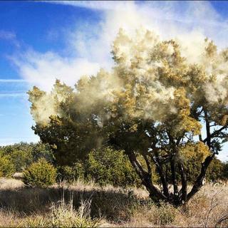 花粉症のシーズンになると鼻血がよく出るけど、症状のひとつなの?