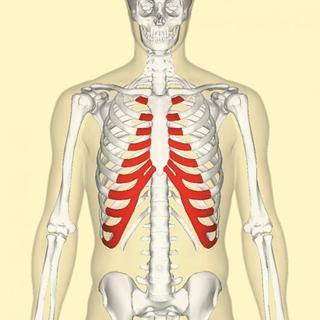 骨折?肋間神経痛?「あばらの痛み」は何科へ行けばいいのか、判断のポイント