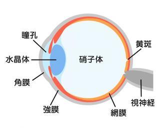 子どもの目の病気「屈折異常」は3才までの発見が鍵!早期治療が大切な「屈折異常」の種類と症状、治療法を知ろう