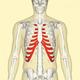 肋骨の痛みは病院を受診すべき?あばら骨が痛い場合に考えられる原因