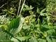 カナムグラ花粉症の時期や症状を解説!秋の花粉症にも要注意