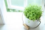 秋の花粉症の症状と対策!原因となる植物は?