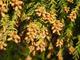 春の花粉症の原因となる種類は?3月・4月・5月の花粉症