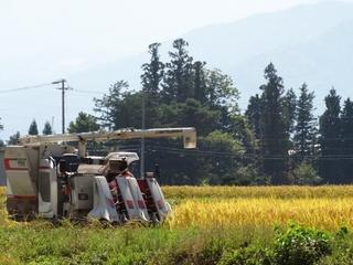 イネ科花粉症は、小麦アレルギーの引き金にも!収穫の秋に注意したいアレルギー対策と予防法について